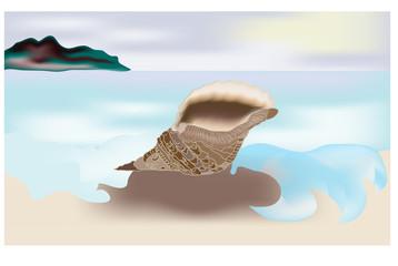 Conchiglia sulla spiaggia