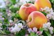 Blüten, Ernte