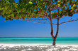 canvas print picture - Zanzibar tropical tree at the beach