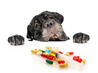 Dog and pills.