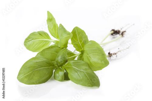 Basil twig
