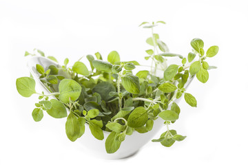 Oregano in bowl