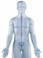 Vertebra position anatomy man isolated