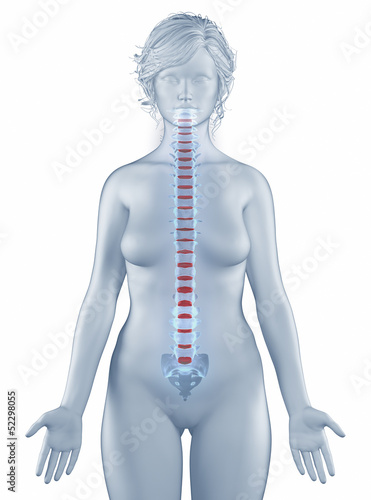 Vertebra position anatomy woman isolated