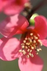 fiore rosso di primavera