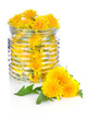 dandelion in glass jar with green leaves