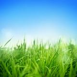 Fototapety Fresh Grass