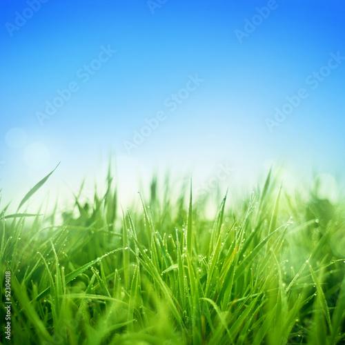 swieza-trawa