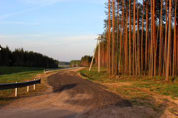 Sandy road in a forest