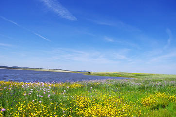 Field at spring time, near alqueva lake