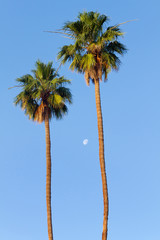 Palm Trees and Moon