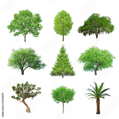 In de dag Palm boom tree