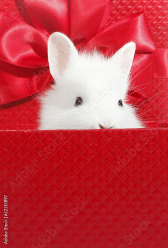 White rabbit in box