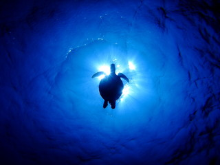 ウミガメのシルエット