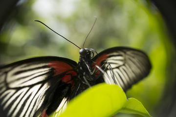 Papillon posé sur une feuille