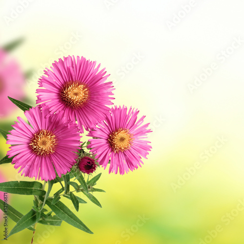 flowers on blurred green background