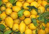 wallpapers of ripe lemons from Sicily yellow excellent to make l