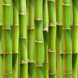 Bamboo stalks background.