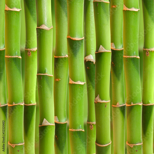 Bamboo stalks background. © Valentina R.