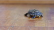 pond slider.terrapin terrapin.	slider turtle