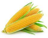Fototapety corn