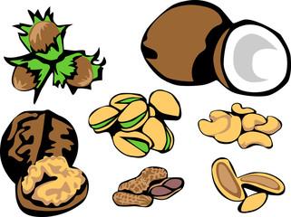 nuts - hazelnut, coconut, walnut