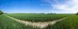 Panoramafoto von einem Getreidefeld in Brandenburg