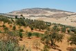 Olive groves, Andalusia, Spain © Arena Photo UK