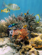 Colorful underwater scenery in the Caribbean sea