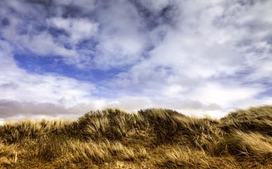 Dunes at the Danish North Sea coast on Fano