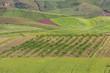 Felder und Plantagen, Sizilen