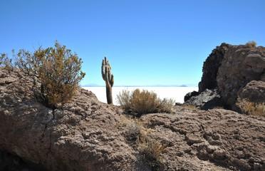 Island Incahuasi Salar de Uyuni, Bolivia