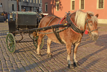 Horse in Warsaw - Poland