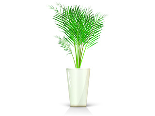 beige vase with palm