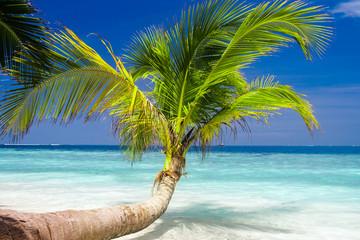 Exotic palm trees on white sand beach. Luxury resort.