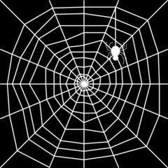 cobweb with spider silhouette vector