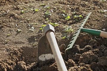 Coltivare la terra
