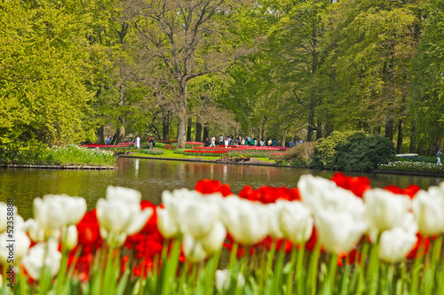 Red and white tulips in garden with tourists in the background.