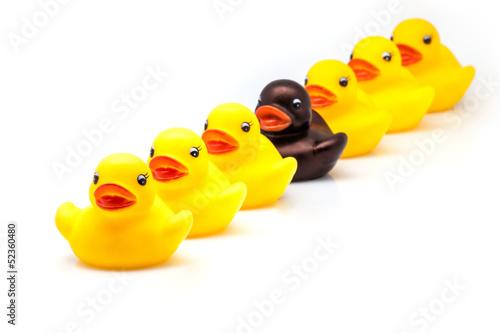 fila de patos