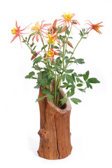 Bouquet of yellow flowers Columbine in wooden vase isolated