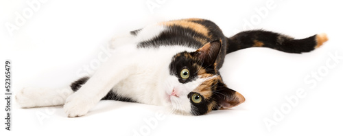 Young cat lying on the ground, isolated in white