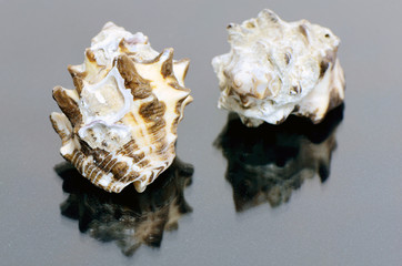 Sea Shell Collections.
