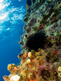 Beautiful marine life on the coral reef and sea urchin