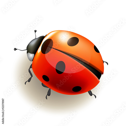 Ladybird. Vector illustration.