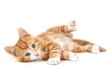 Little red kitten, lying on the ground. - Fine Art prints