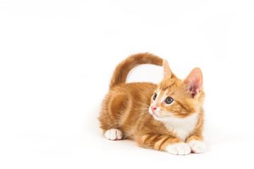 Little red kitten, looking up