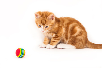 Little red kitten looking at ball