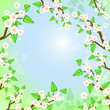 Decorative background with spring white blooming trees, eps10
