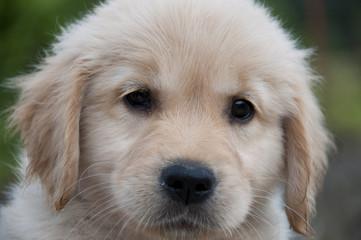 Cucciolo tenero di cane