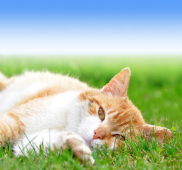 young cat lying in the grass